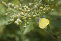 Fjäril med en blomma Arkivbild