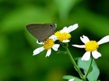 Fjäril med härliga blommor royaltyfria bilder