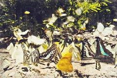 Fjäril nära floden Digital Art Impasto Oil Painting Abstr royaltyfria bilder
