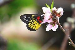 Fjäril och blomma royaltyfri fotografi