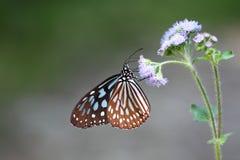 Fjäril och blomma Royaltyfria Bilder