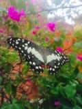 Fjäril och blomma Arkivfoton
