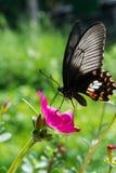 Fjäril och blomma Royaltyfri Foto