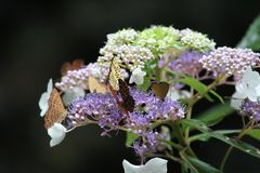 Fjäril och blomma i chongqing royaltyfria bilder