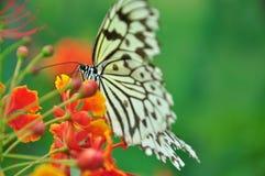 Fjäril och blommor Royaltyfri Bild