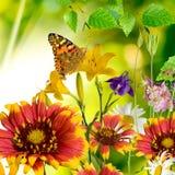 Fjäril och blommor Royaltyfria Bilder