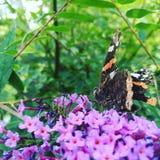 Fjäril och blommor Arkivfoton