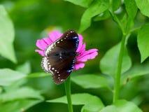 Fjäril och blommor royaltyfri foto
