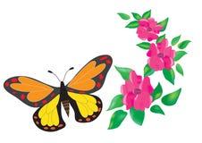 Fjäril och blommor på en vit bakgrund Royaltyfria Bilder