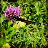 Fjäril och en blomma royaltyfri fotografi