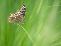 Fjäril och gräs Royaltyfria Foton