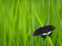 Fjäril och grönt gräs Arkivfoton