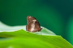 Fjäril och leaf Royaltyfria Bilder