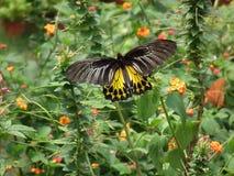 Fjäril och natur 5 Arkivfoto