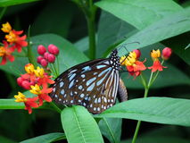 Fjäril och natur 7 arkivbild