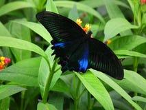 Fjäril och natur 8 arkivfoto
