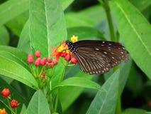 Fjäril och natur 10 arkivbilder
