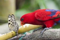 Fjäril och papegoja Royaltyfri Foto