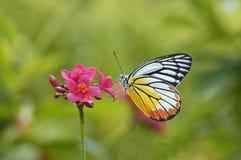 Fjäril och röd blomma Royaltyfria Foton