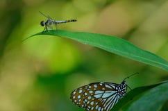 Fjäril och slända Royaltyfri Foto