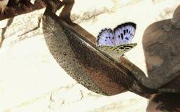 Fjäril och solglasögon Fotografering för Bildbyråer