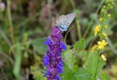Fjäril och vildblommor arkivbilder