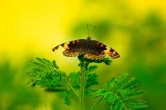 Fjäril på överkanten av den lösa växten arkivfoto