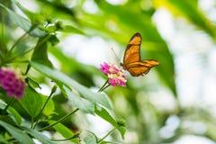 Fjäril på blomma Royaltyfria Foton