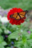Fjäril på blomman Arkivbild