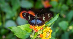 Fjäril på blomman arkivfoton