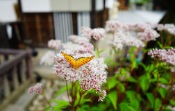 Fjäril på blomman Royaltyfria Bilder