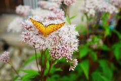 Fjäril på blomman Arkivfoto