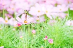 Fjäril på blomman Royaltyfri Foto