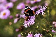Fjäril på blommasommardag Arkivbilder
