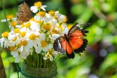 Fjäril på blommor Arkivfoton