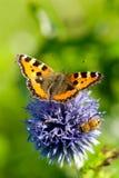 Fjäril på blommor i solskenet i sommartiden, Sverige royaltyfria foton