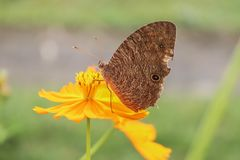 Fjäril på den färgglade blomman royaltyfri bild