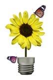 Fjäril på den gula blomman (lampa) II Arkivbilder