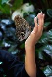 Fjäril på den kvinnliga handen Fotografering för Bildbyråer