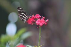 Fjäril på den lilla röda blomman arkivfoton