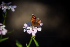 Fjäril på den mjuka blomman under solen fotografering för bildbyråer