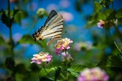 Fjäril på den söta blomman Royaltyfri Bild
