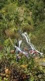 Fjäril på Eden Project i St Austell Cornwall Arkivbilder