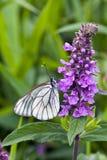 Fjäril på en blomma Arkivbild