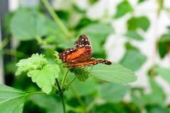 Fjäril på en blomma - makrobild Royaltyfri Foto