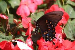 Fjäril på en blomma royaltyfri bild
