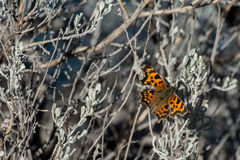 Fjäril på en buske Royaltyfria Foton