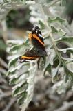 Fjäril på en förgrena sig Arkivbild