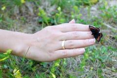 Fjäril på en hand Fotografering för Bildbyråer