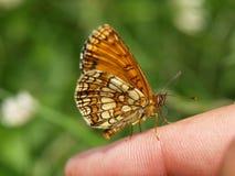 Fjäril på en hand Arkivbild